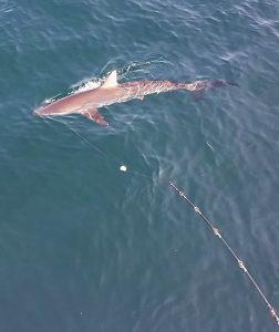 Shark Deep Sea Fishing Special